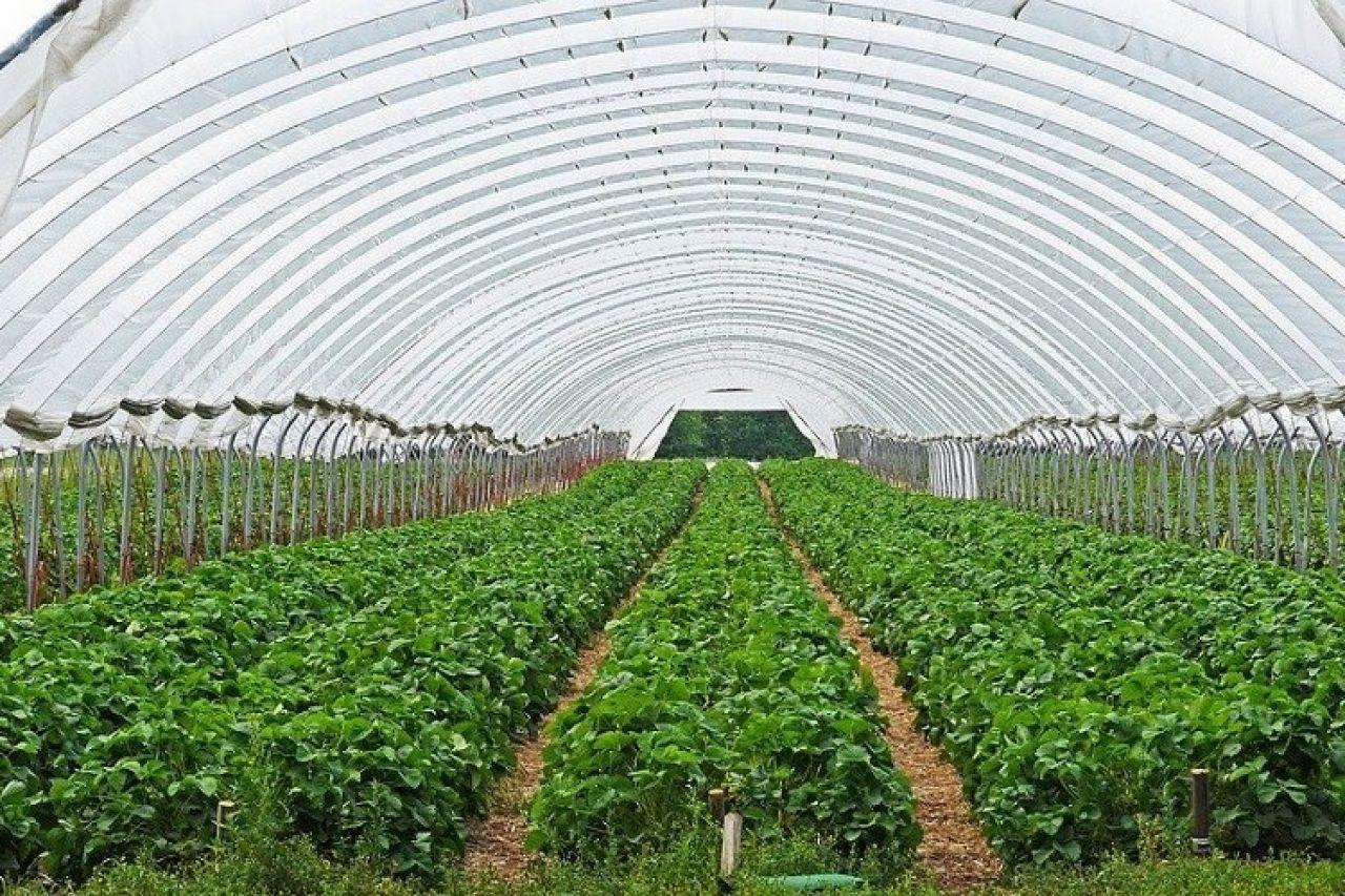 Potpora Ministarstva poljoprivrede poljoprivrednim gospodarstvima